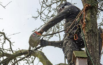 the process of removing dead wood from Little Marlow trees