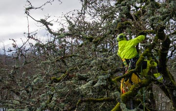 experienced Little Marlow arborists are needed