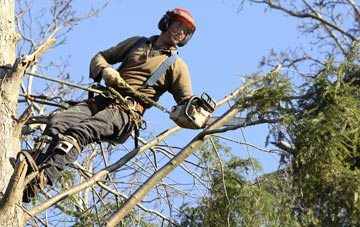 hiring experienced Little Marlow tree surgeons