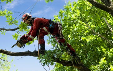 find trusted rated Little Marlow tree surgeons in Buckinghamshire