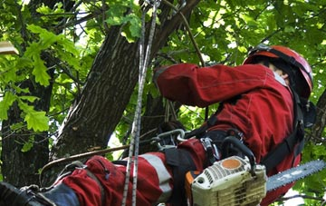 hiring professional Little Marlow tree surgeons
