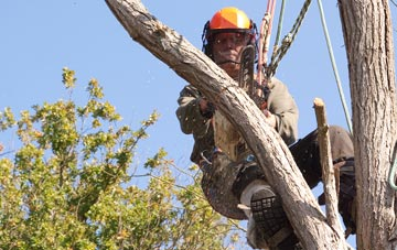 finding qualified Little Marlow tree surgeons