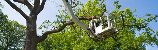 Little Marlow tree surgery services