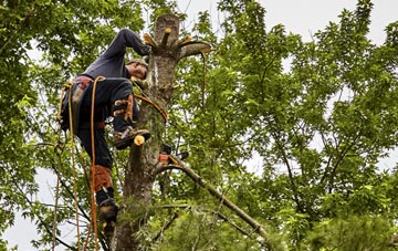 tree surgeon Little Marlow, Buckinghamshire