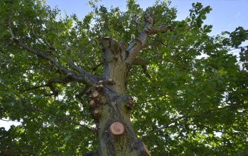 what is Little Marlow tree surgery?