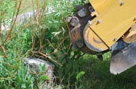 free Little Marlow tree stump grinding quotes