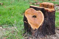 free Little Marlow tree stump removal quotes