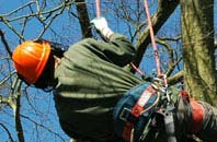 free Little Marlow tree surgeon quotes